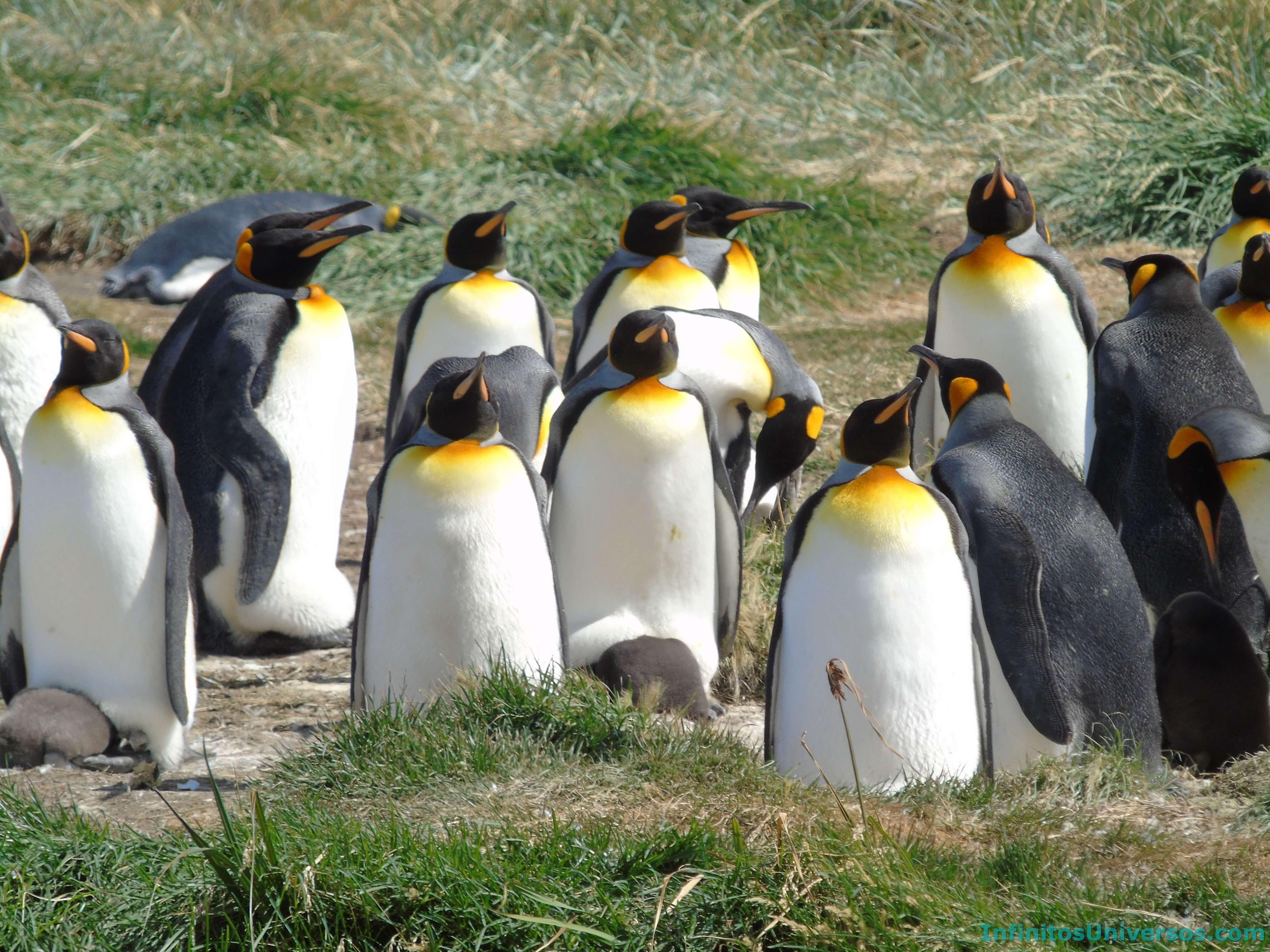 Qué ver en Tierra del Fuego, Patagonia
