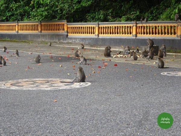 Ubud alas kedaton - Qué ver en Bali en una semana