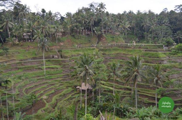 tegallalang - Qué ver en Ubud