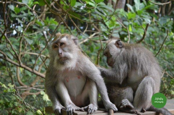 ubud  - Qué ver en Bali (Indonesia)